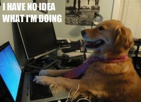 Golden retriever wearing tie pretending to type on a laptop with the captions, I have no idea what I'm doing